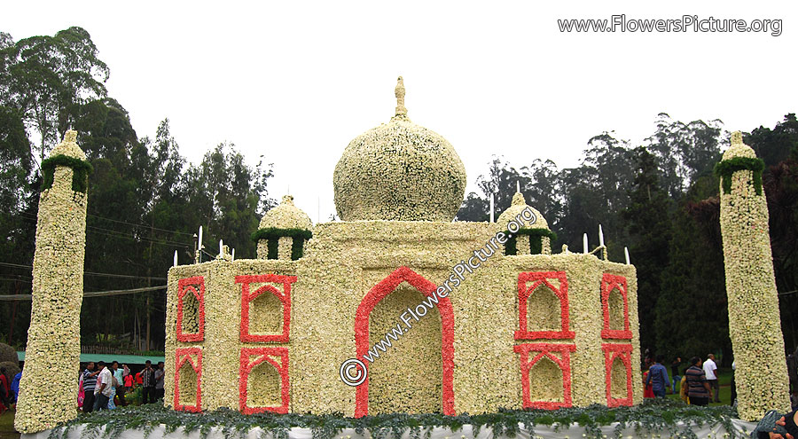 Taj mahal-Agra-1 lakh white rose flowers decoration