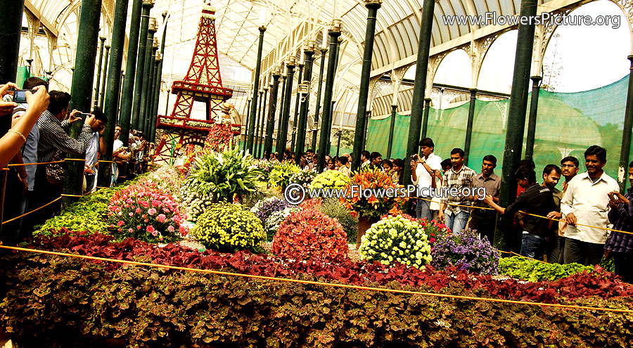 Main view of lalbagh flower show 2013