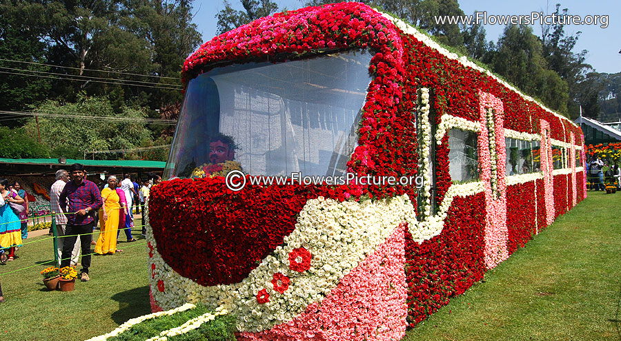 Rose Flower Train