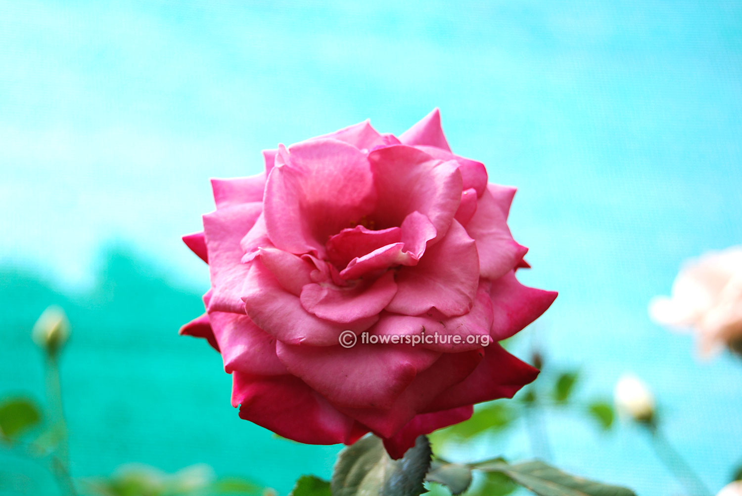 Flower Pictures List - A to Z Flowers, Plants with Names & Details