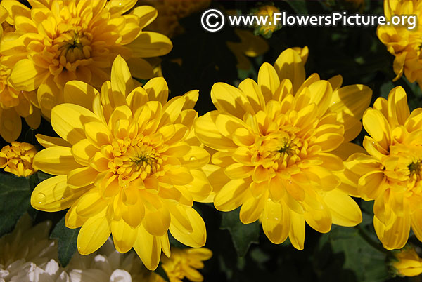 Flowers By Color Yellow Yellow Flowers Images