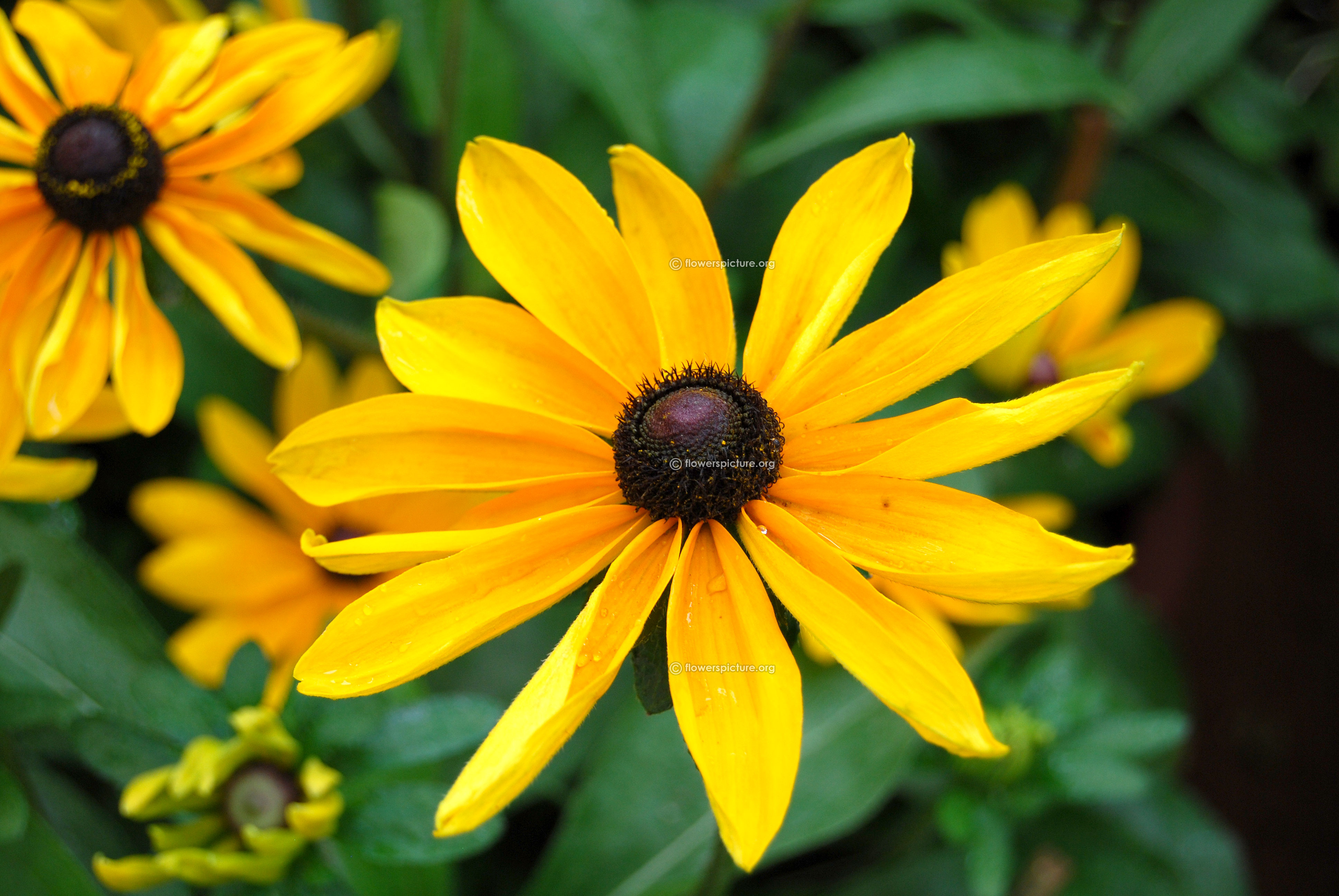 Yellow Flowers Gallery 1 Yellow Flowers Images With Names