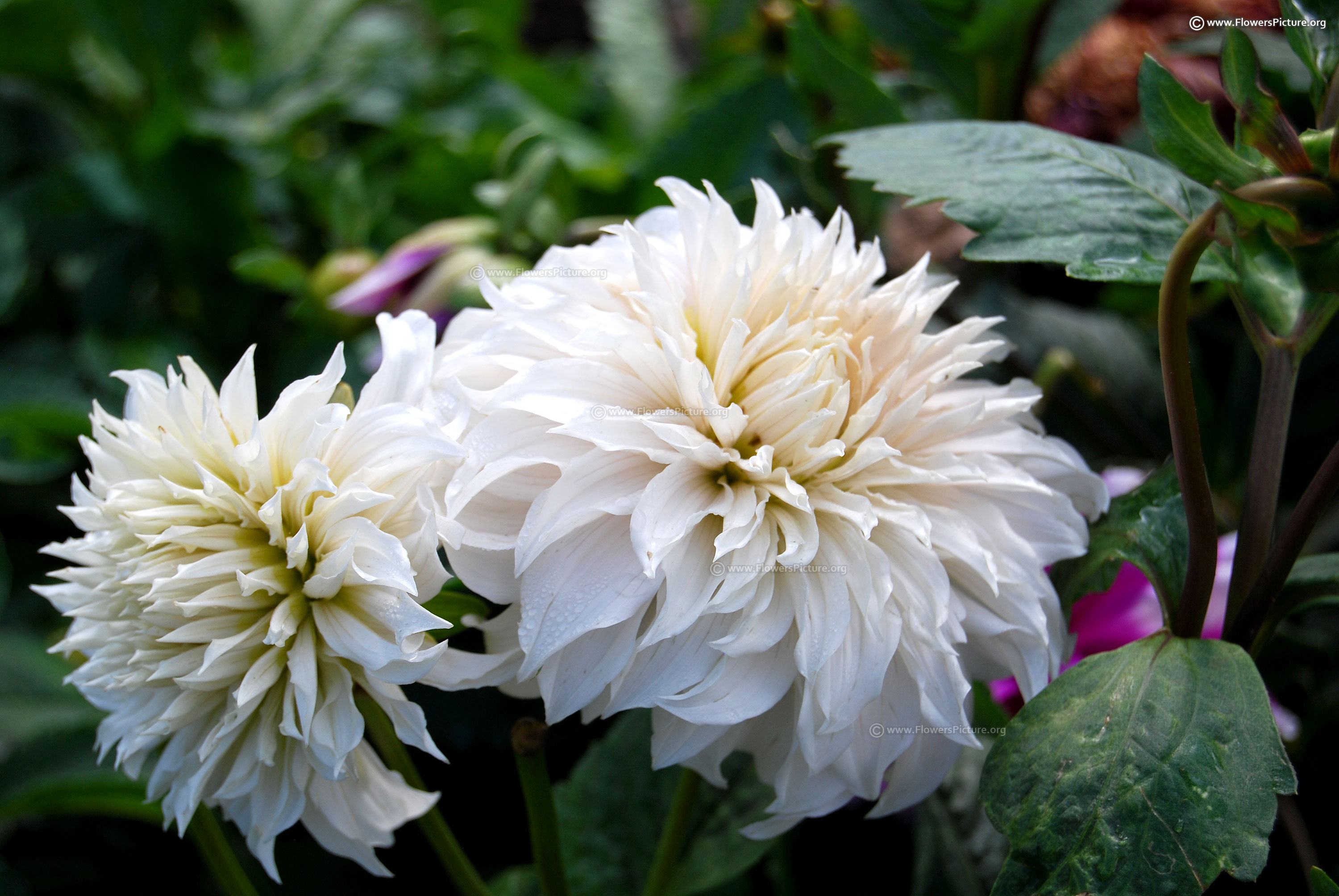 White Flowers With Names