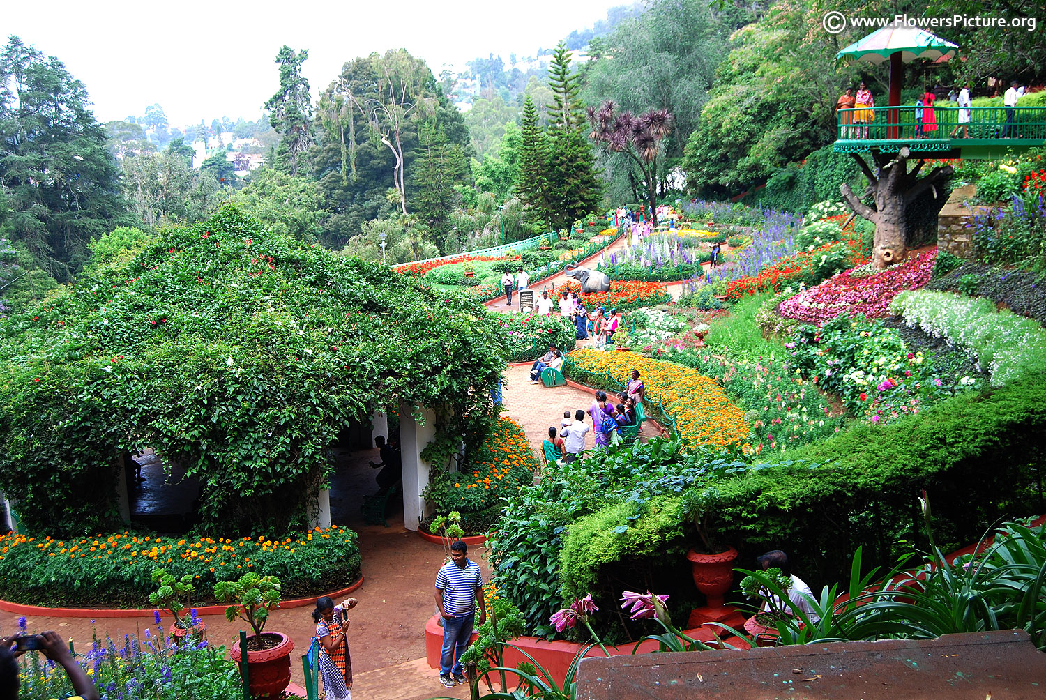 Ooty Flower Show 2017 s