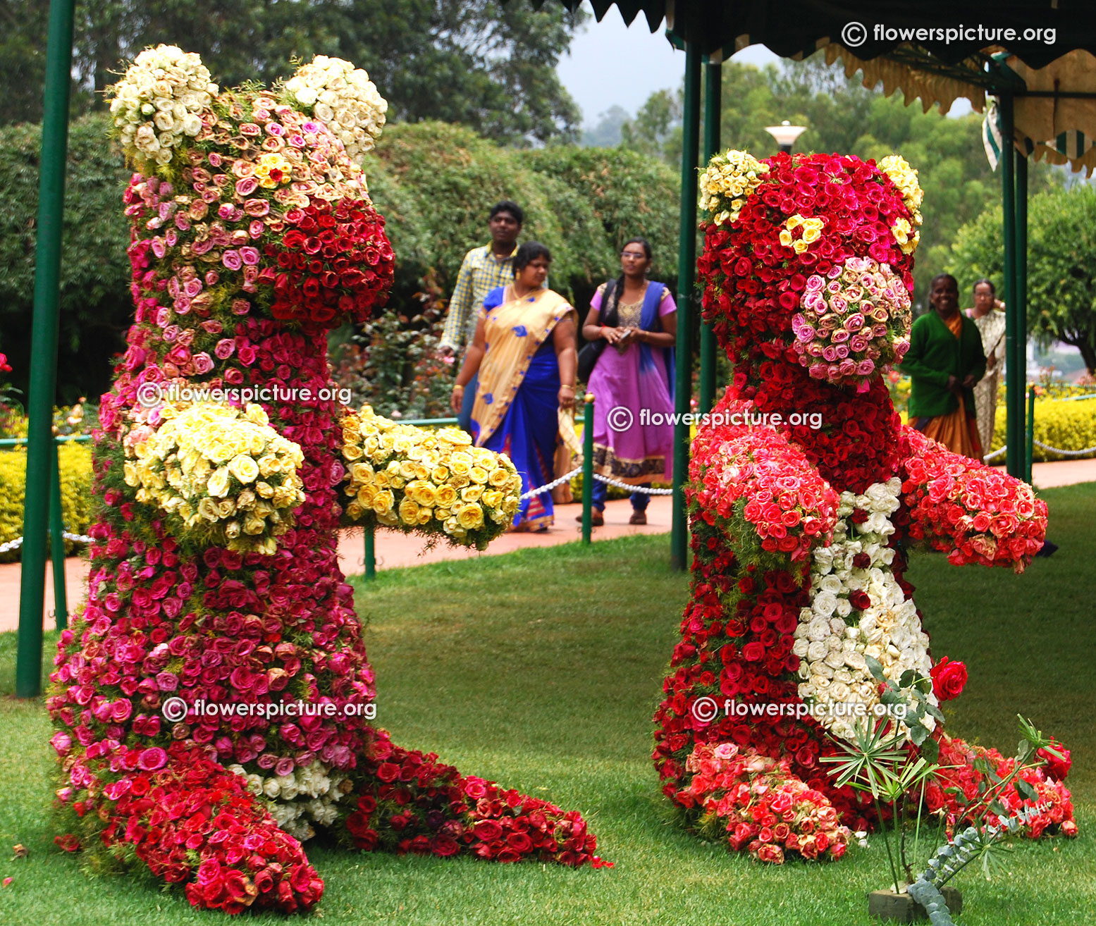 Pictures images hd rose garden ooty