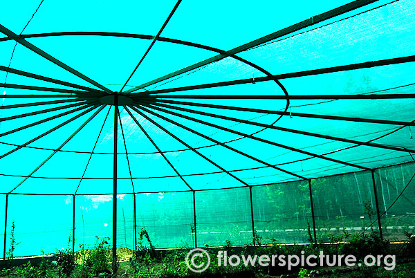Butterfly greenhouse