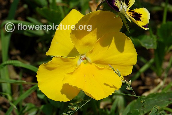 Flowers by Color-Yellow | yellow flowers images