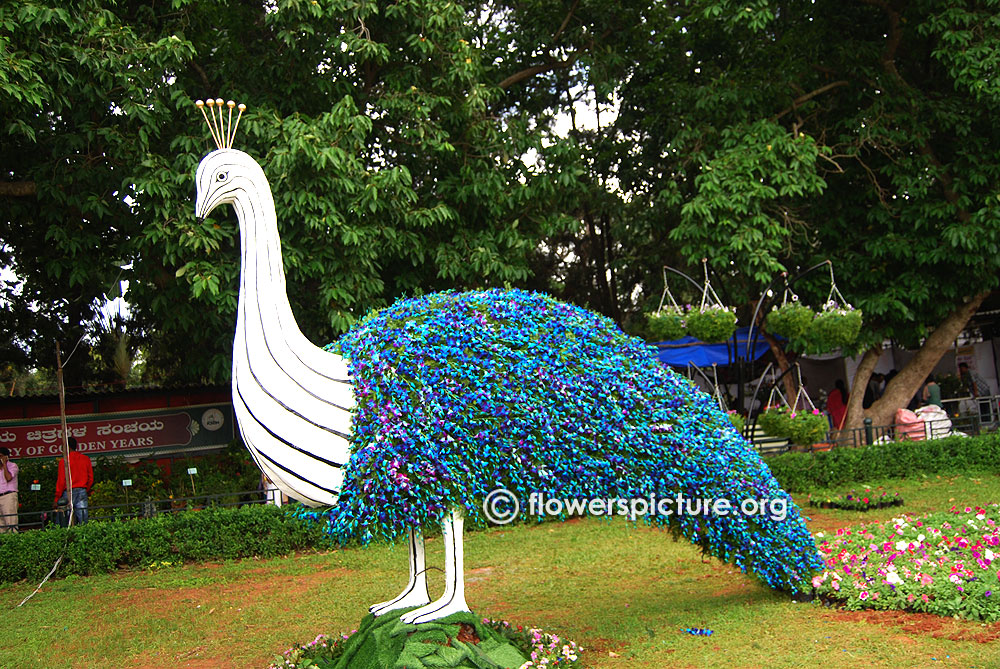 Lalbagh Flower Show August 2016 Photos Independence Day